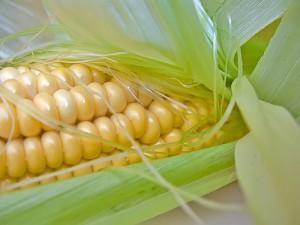 Кукуруза Автор фото: Lita