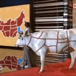 мясо-история-всероссийского-обмана